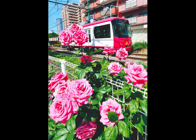 春之大冢玫瑰祭