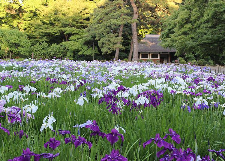 Koshikawa Korakuaen Garden