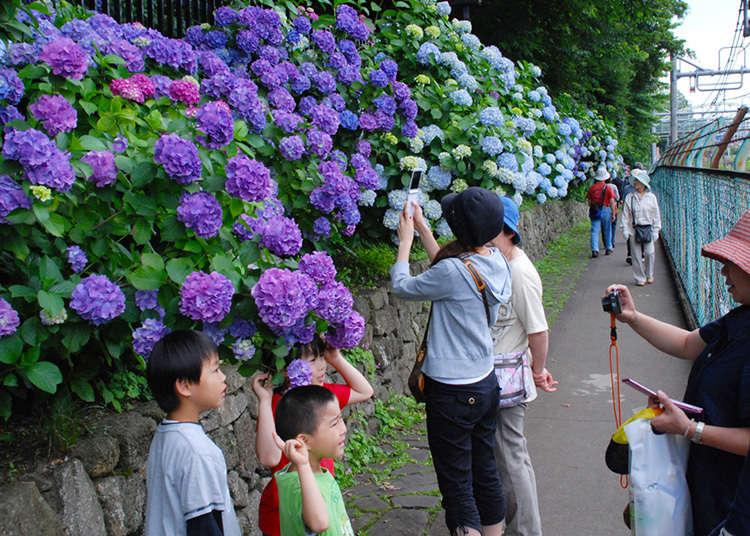 Taman Asukayama