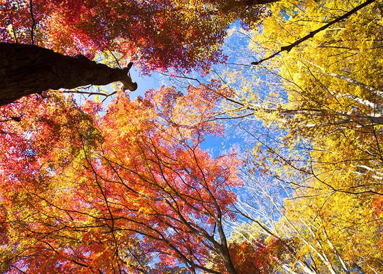 วันหยุดนักขัตฤกษ์ ฤดูใบไม้ร่วง