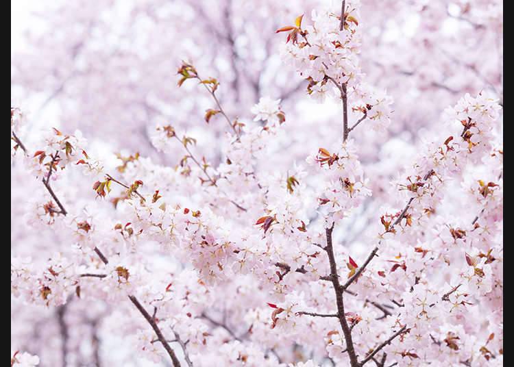 春季的公众假期