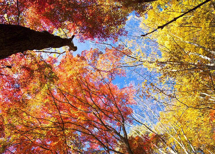 秋季的國定假日