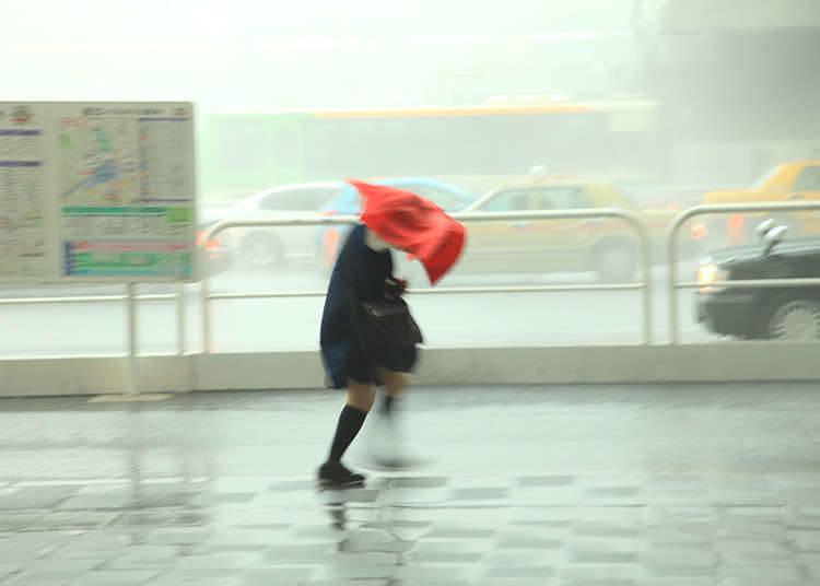 The Typhoon Season