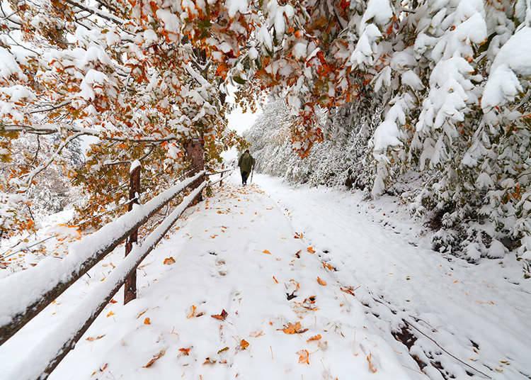 The Winter Season