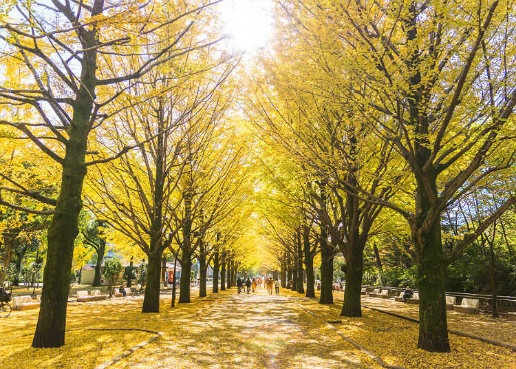 What it like in Japan's Autumn Season?
