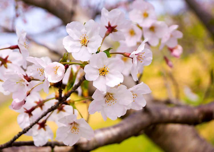 봄의 계절
