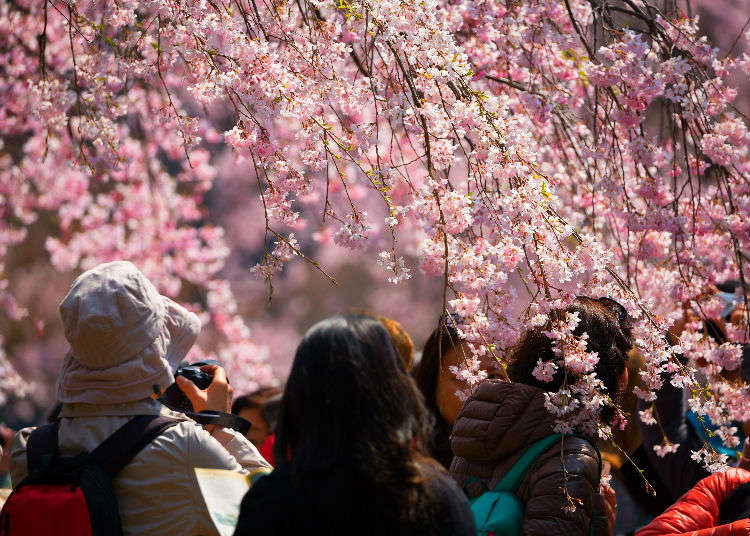 Learn and Enjoy the Varying Climates of Japan