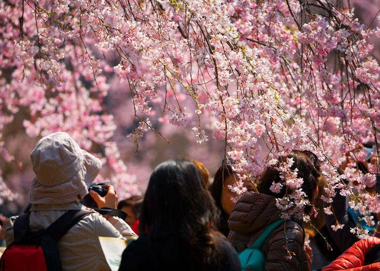 四季分明的日本氣候與各月份氣溫