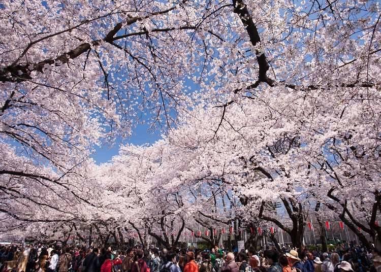 浅草と上野の概要