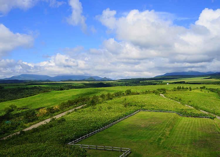 北海道:道产子的土地