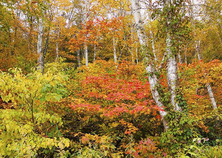 ญี่ปุ่น ประเทศแห่งป่าไม้