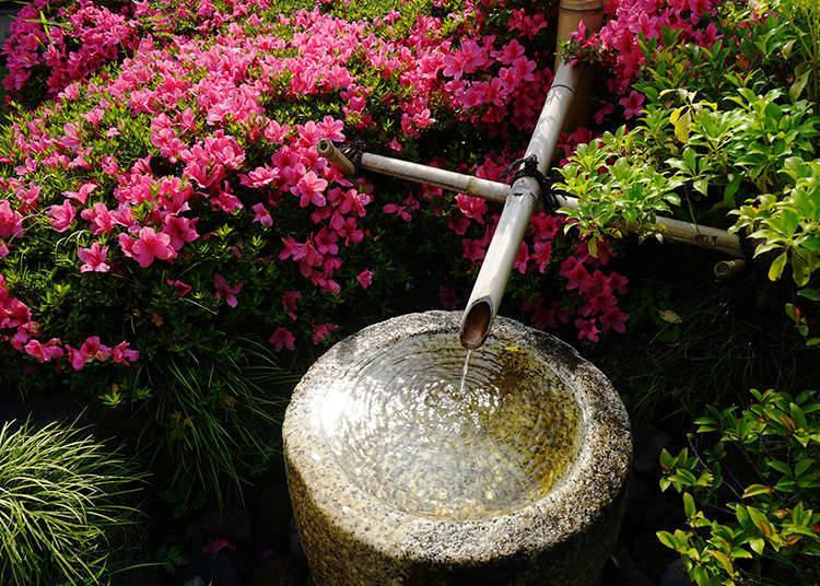 자테이(茶庭) 정원(노지)