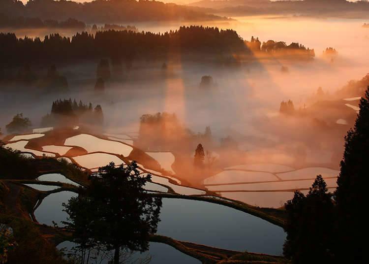 日本の原野風景