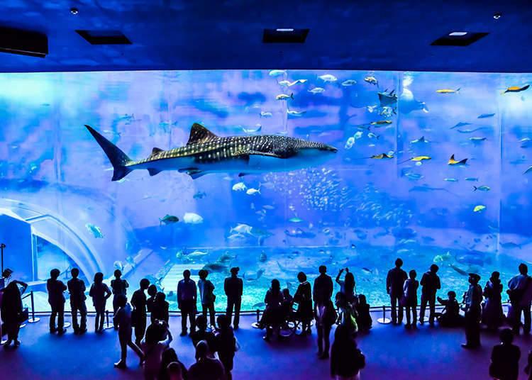 Aquarium with giant tanks