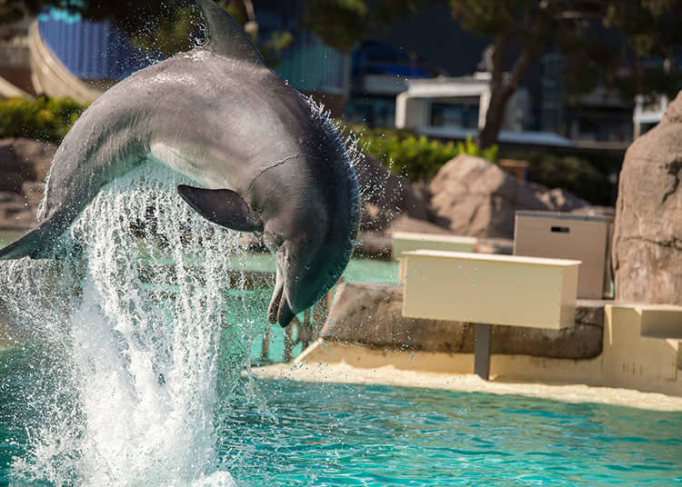 Performances of dolphins and seals can be seen