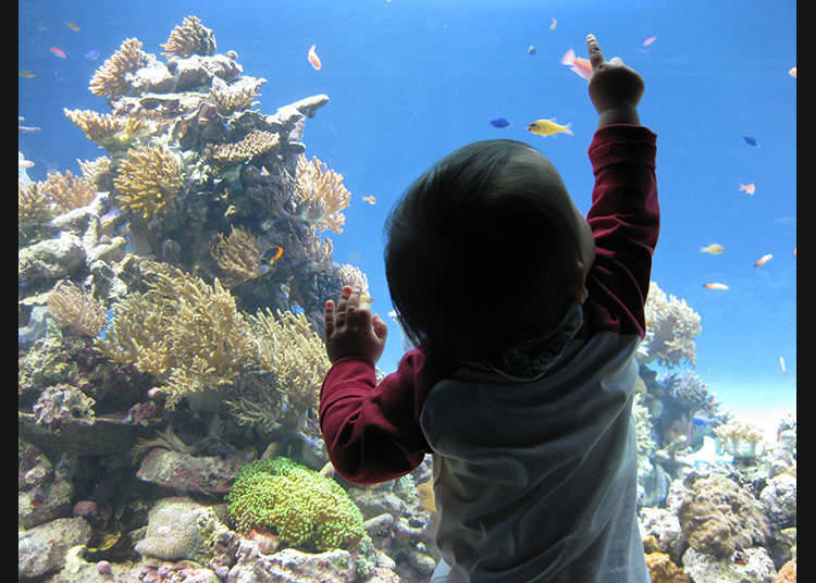 자연의 바다를 그대로 재현