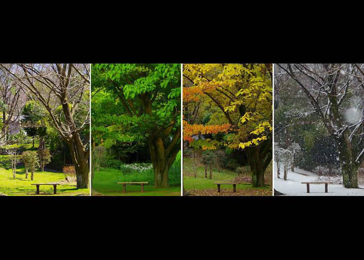 ฤดูทั้งสี่ของญี่ปุ่น