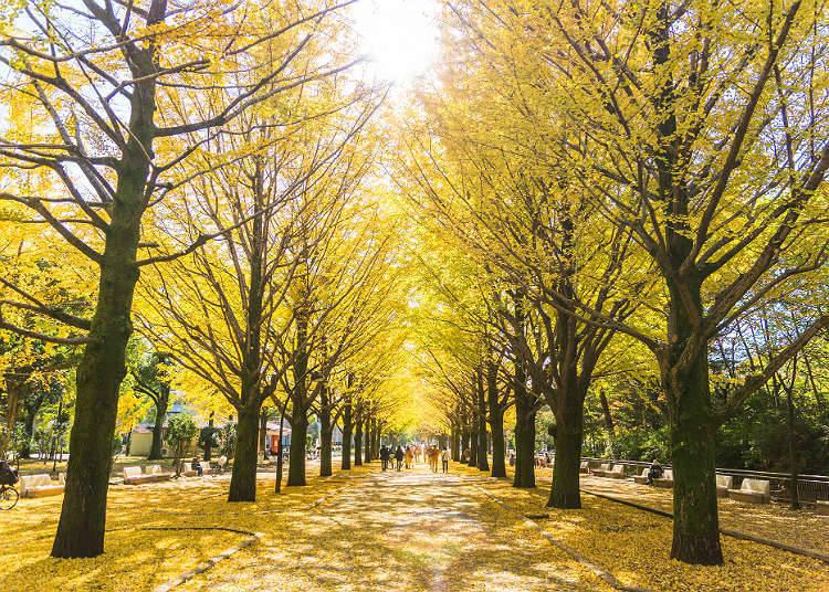 秋季的活動