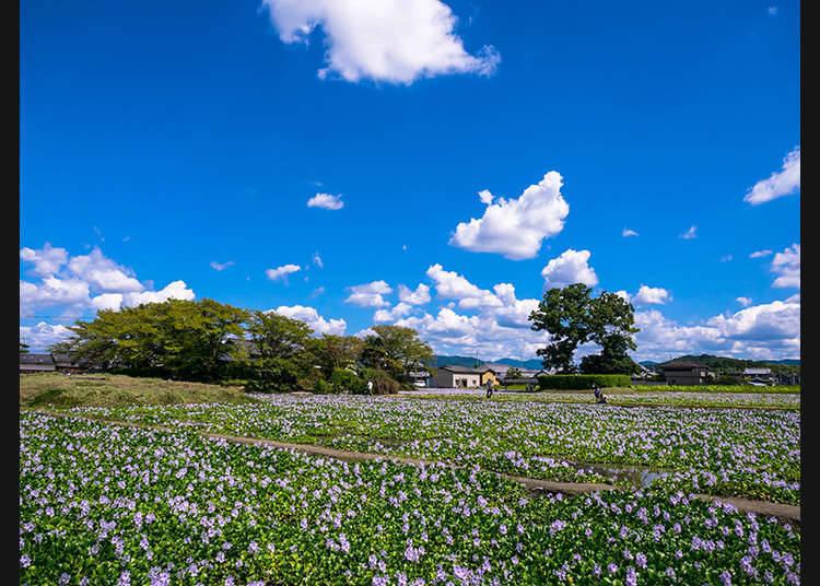 Makna Mengunjungi Shajiseki dan Kyukeidai