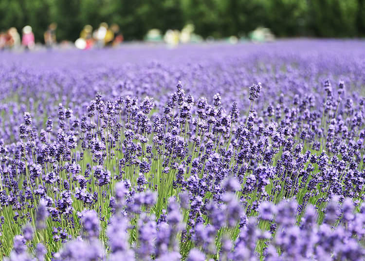 Ladang bunga