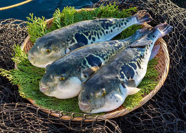Types of fugu