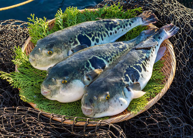 Types of fugu