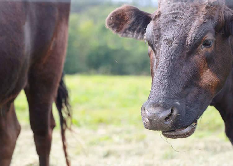 ประเภทของเนื้อวัว