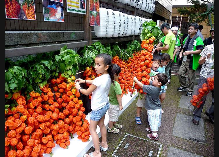 The Hozuki Market at Asahi Shrine