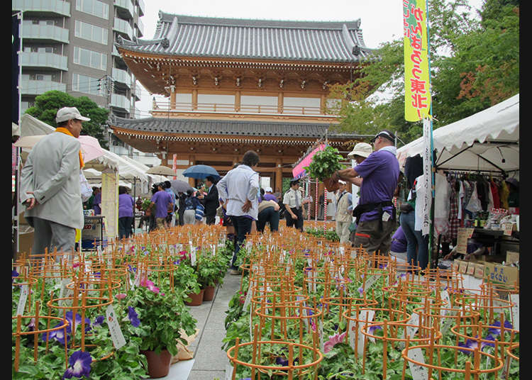 Bunkyo Asagao-Ichi (Pasar Bunga Morning Glory Bunkyo)