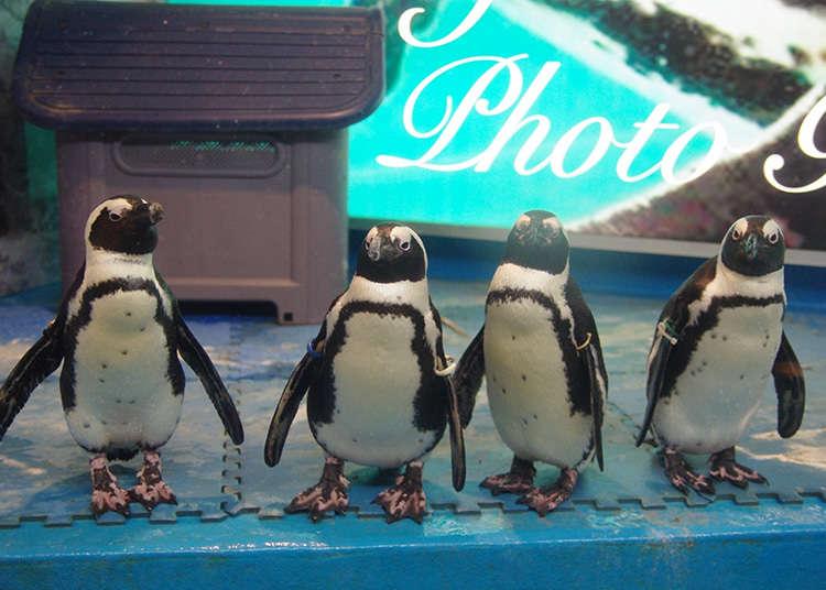 有企鵝的酒吧