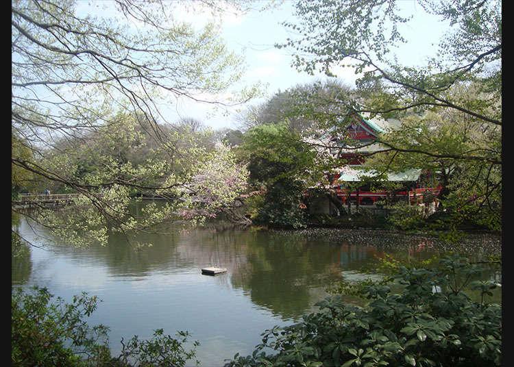 '이노카시라온시 공원'을 산책