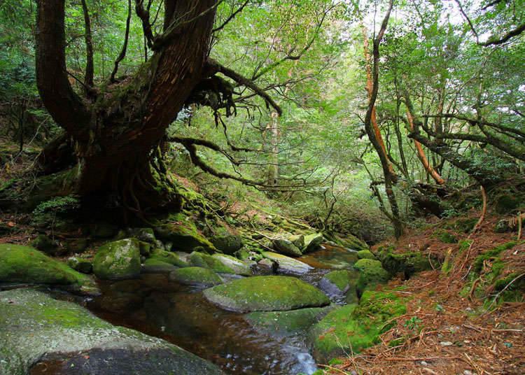 世界自然遺產觀光的重點以及規則