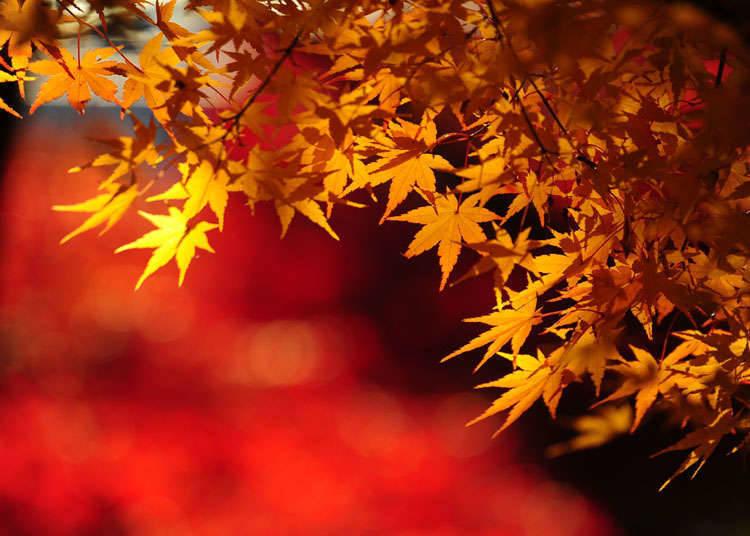 對日本人來說,人氣的日本世界遺產