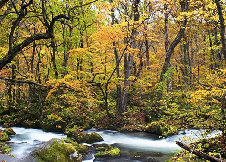 日本知名的溪谷、溪流
