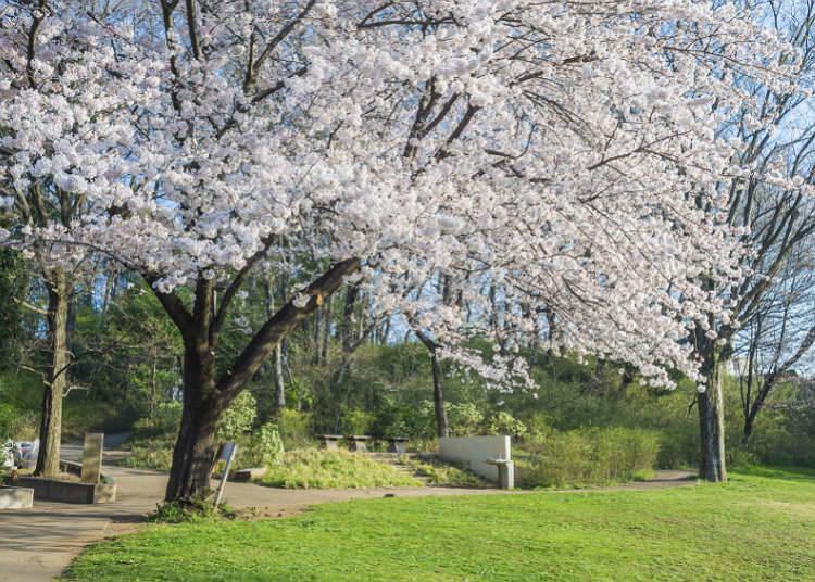 公园的自然环境