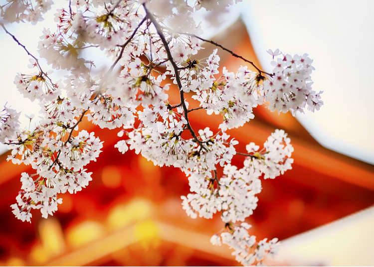 How to enjoy four seasons