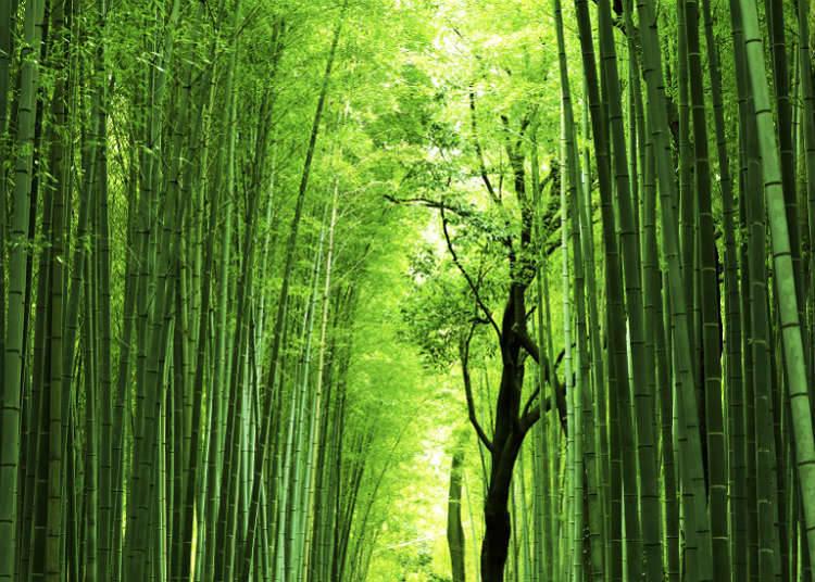 エキゾチックな自然風景