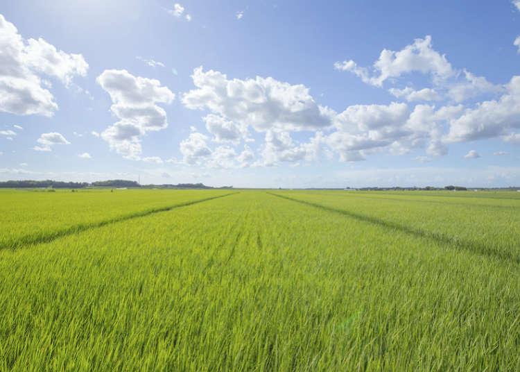 Perkampungan pertanian