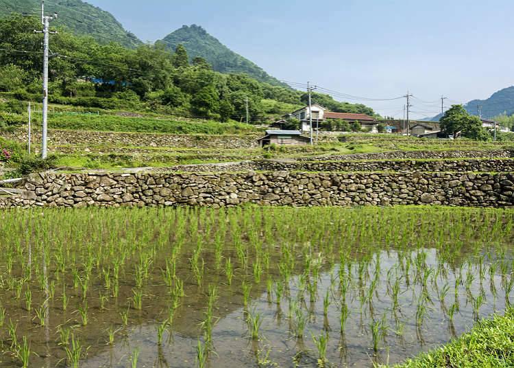 現代の農村