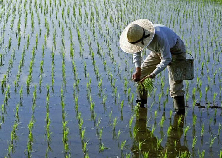 兼業農業と地方移住者の増加