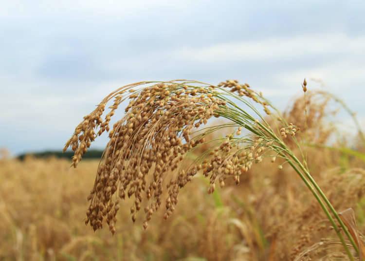 Pemandangan menarik di perkampungan pertanian
