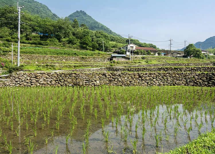 Perkampungan pertanian pada masa kini
