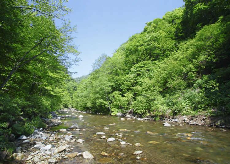 自然遺產的山脈