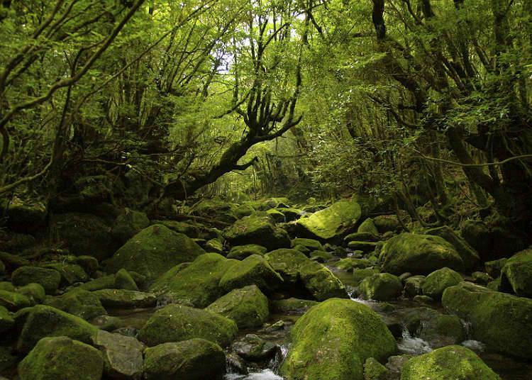 自然遺產的森林