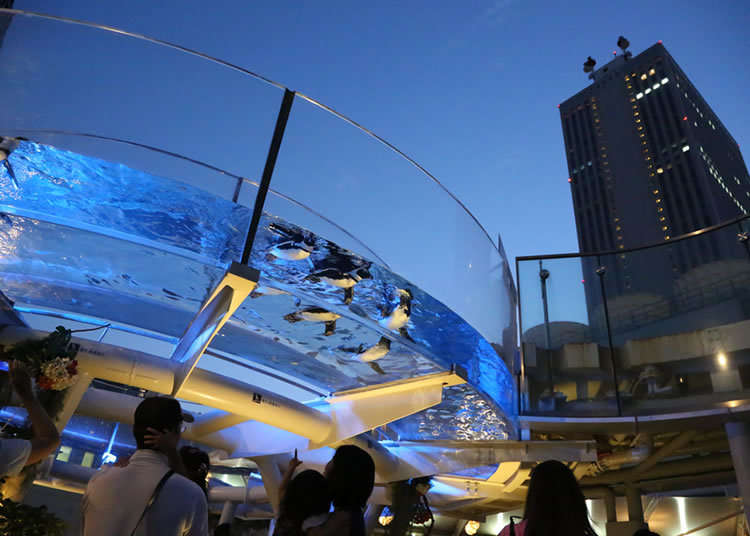 The Right Place to Cool Off: Aquarium Beer Garden