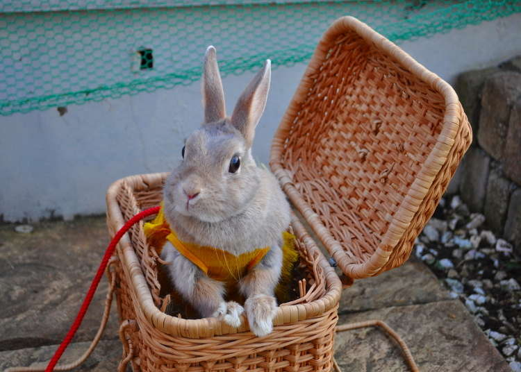 "[MOVIE] A Visit to Bunny Theme Park ""HUTCH"" in Asakusa"