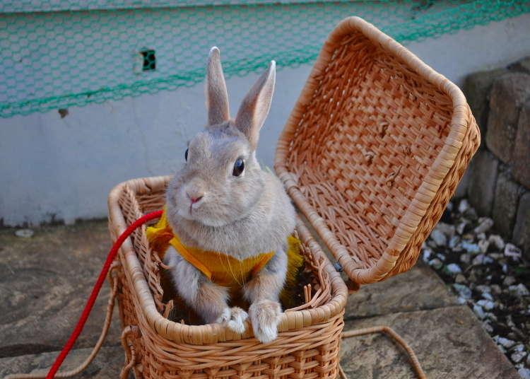 [MOVIE] 可以與兔子玩耍嬉戲的兔子咖啡店就在淺草!