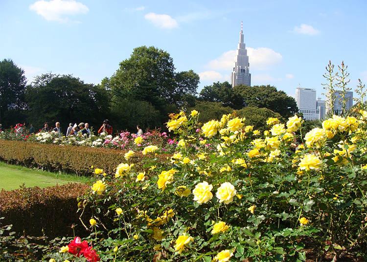 約110種500株のバラを植栽