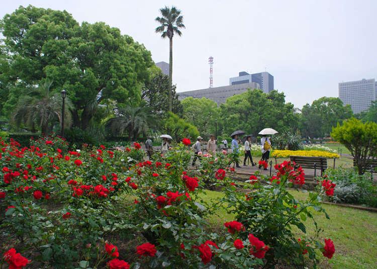 為商業街的綠洲著上美麗色彩的玫瑰花