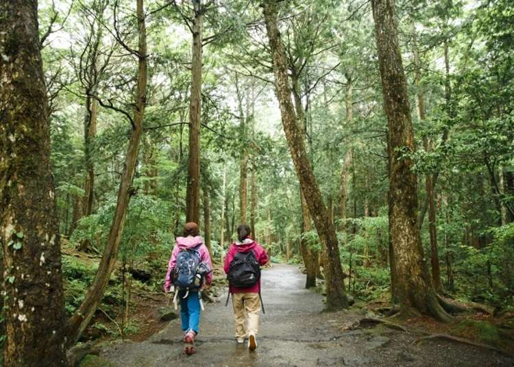 Start your Journey through Aokigahara at the Foot of Mount Fuji
